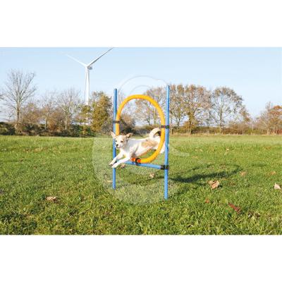 Agility : Anneau Dog Activity