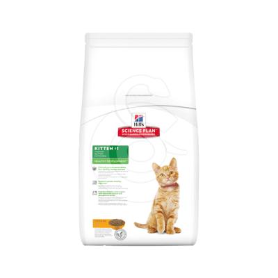 Kitten Poulet Healthy Development